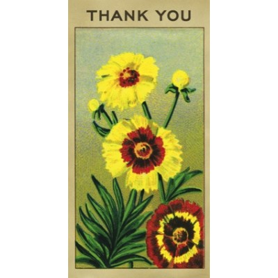 Coreopsis - Thank You